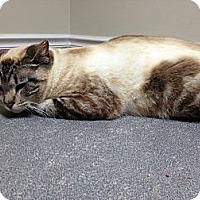 Adopt A Pet :: Platinum/Blake - Monroe, GA