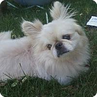 Adopt A Pet :: Chester - Virginia Beach, VA
