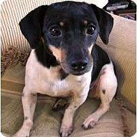 Adopt A Pet :: Maggie - Jacksonville, FL