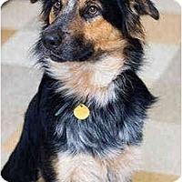 Adopt A Pet :: Manny - Portland, OR