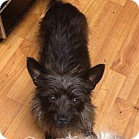 Adopt A Pet :: Toto - Hazard, KY