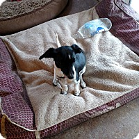 Adopt A Pet :: Betsy - Simi Valley, CA