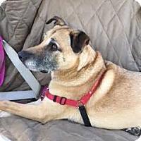 Adopt A Pet :: Lucky - Petaluma, CA