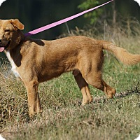 Adopt A Pet :: Parker in CT - Manchester, CT