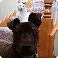 Adopt A Pet :: Judy - Wheaton, IL