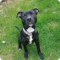 Adopt A Pet :: Eleanor - Warrenville, IL
