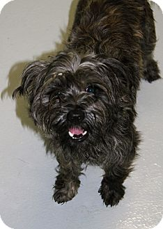 Terrier (Unknown Type, Small) Mix Dog for adoption in Muskegon, Michigan - Otis