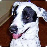 Adopt A Pet :: Willow -= Courtesy Post - Scottsdale, AZ