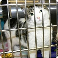 Adopt A Pet :: Missy - Greenville, SC