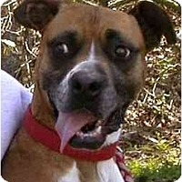 Adopt A Pet :: Lucy - Albany, GA