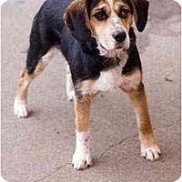 Adopt A Pet :: Odis - Portland, OR