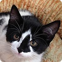 Adopt A Pet :: NIKI - 2013 - Hamilton, NJ