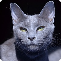 Adopt A Pet :: Cassie - Brooklyn, NY