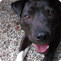 Adopt A Pet :: Velvet - Muskegon, MI