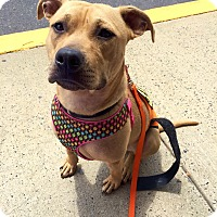 Adopt A Pet :: Ruby - Trenton, NJ