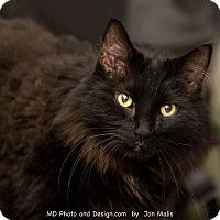 Adopt A Pet :: Ahh Ahh - Fountain Hills, AZ