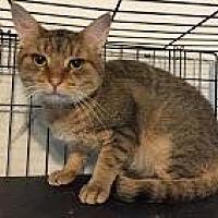 Adopt A Pet :: Tigger - East Stroudsburg, PA