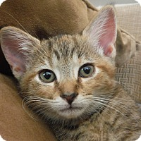 Adopt A Pet :: America - Richmond, VA