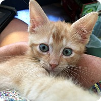 Adopt A Pet :: Milton - Southington, CT