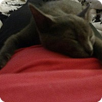 Adopt A Pet :: Winter - Fairborn, OH
