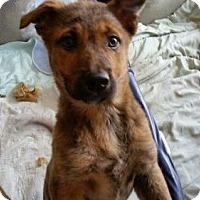 Adopt A Pet :: Tab - Lakeville, MN