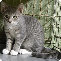 Adopt A Pet :: Judy - Marlinton, WV