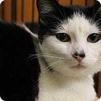 Adopt A Pet :: Ares - Medina, OH