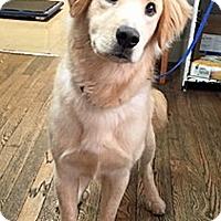 Adopt A Pet :: Veesey - BIRMINGHAM, AL