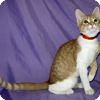 Domestic Shorthair Cat for adoption in Powell, Ohio - Dempsey