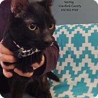Adopt A Pet :: Gilbert - Bucyrus, OH