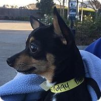 Adopt A Pet :: Chester - San Marcos, CA