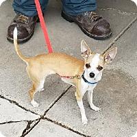 Adopt A Pet :: Lady - Ogden, UT