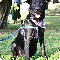 Adopt A Pet :: Apollo - San Mateo, CA