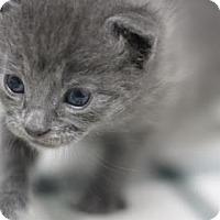 Adopt A Pet :: Herbie - Walla Walla, WA