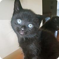 Adopt A Pet :: Aloisius - Mississauga, Ontario, ON