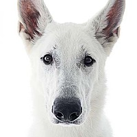 Adopt A Pet :: Jax - San Diego, CA