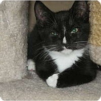 Adopt A Pet :: Charlie - Barnegat, NJ