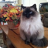 Adopt A Pet :: Lilly - Vero Beach, FL