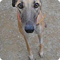 Adopt A Pet :: Roc A By Roxanne - Chagrin Falls, OH