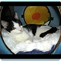 Adopt A Pet :: Sabre - Easley, SC
