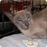 Adopt A Pet :: Sheena - Riverside, RI