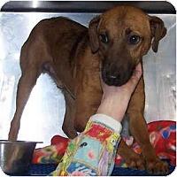 Adopt A Pet :: Drew - Toronto/Etobicoke/GTA, ON