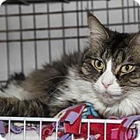 Adopt A Pet :: Harry - Lombard, IL