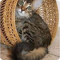 Adopt A Pet :: Myles - Orlando, FL