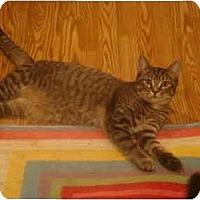 Adopt A Pet :: Axl - Muncie, IN