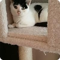 Adopt A Pet :: Violet - Port Republic, MD