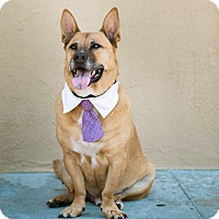 Adopt A Pet :: ADOPTION PENDING- Biggie-VIDEO - Burbank, CA