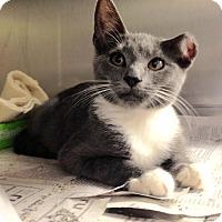 Adopt A Pet :: Van Gogh - East Brunswick, NJ