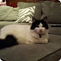 Adopt A Pet :: ROSIE - Ridgewood, NY