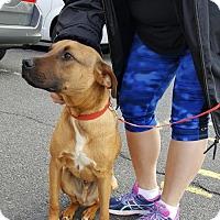 Adopt A Pet :: Bart - Morganville, NJ